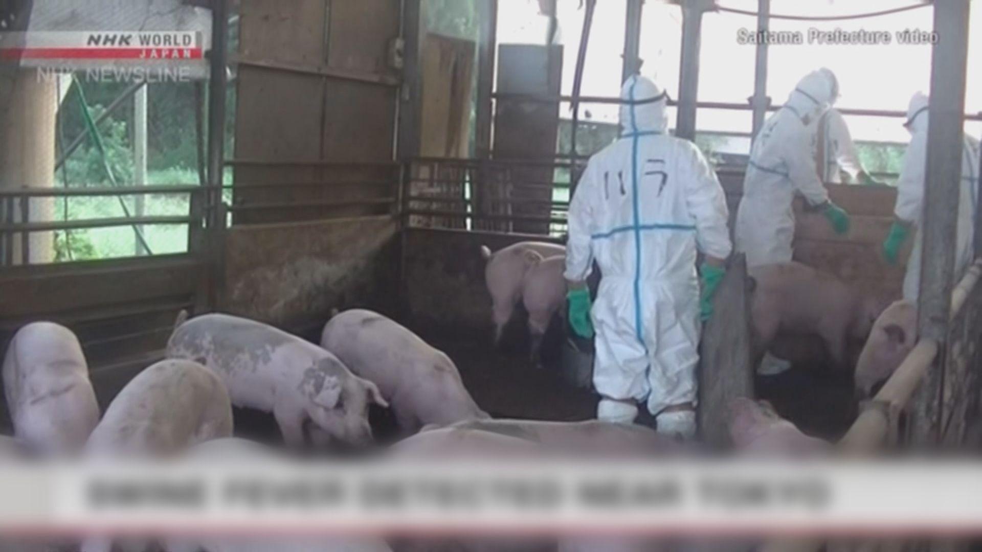 南韓一個月內確診四宗非洲豬瘟病例