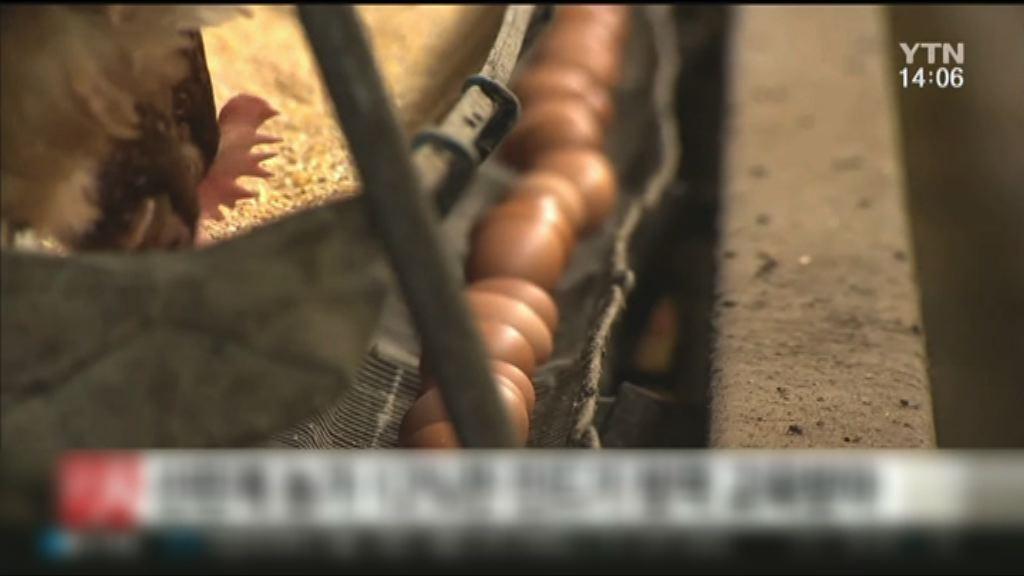 南韓再有養殖場雞蛋含殺蟲劑