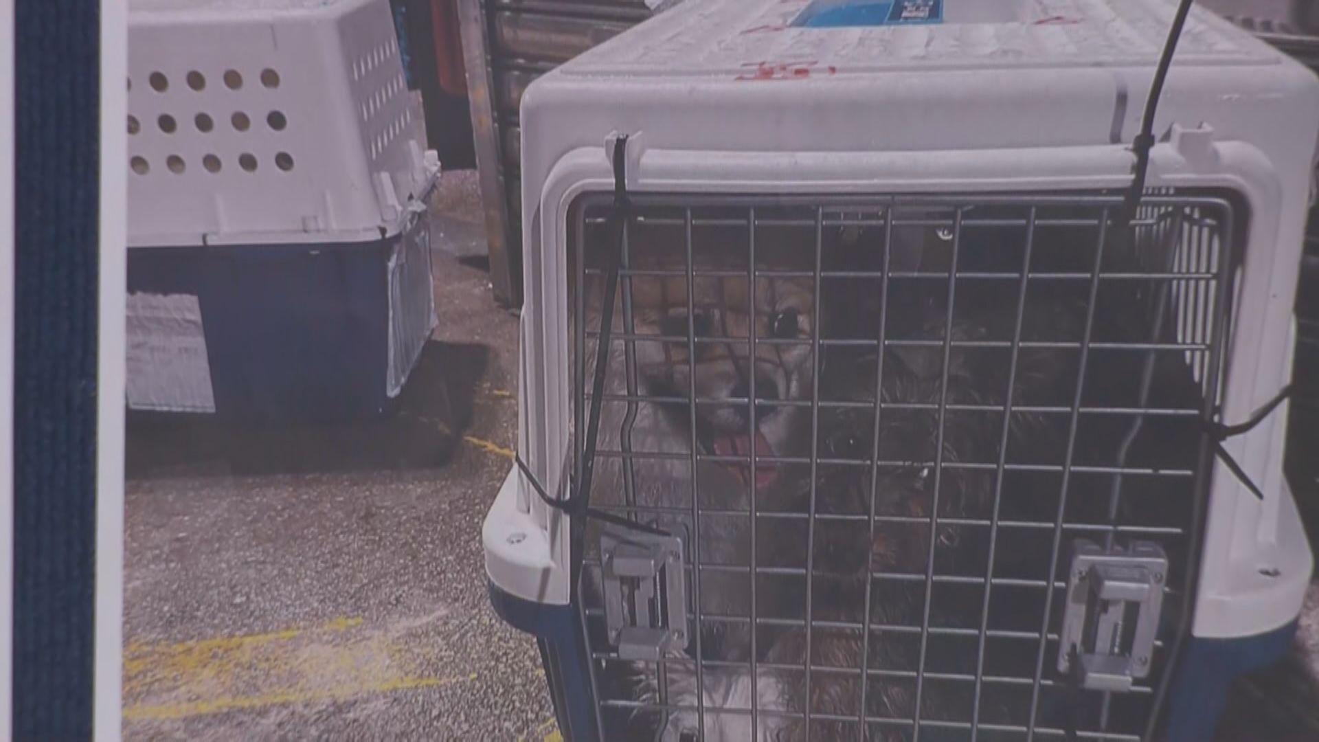海關不排除有人偷運寵物狗隻回內地與主人團聚