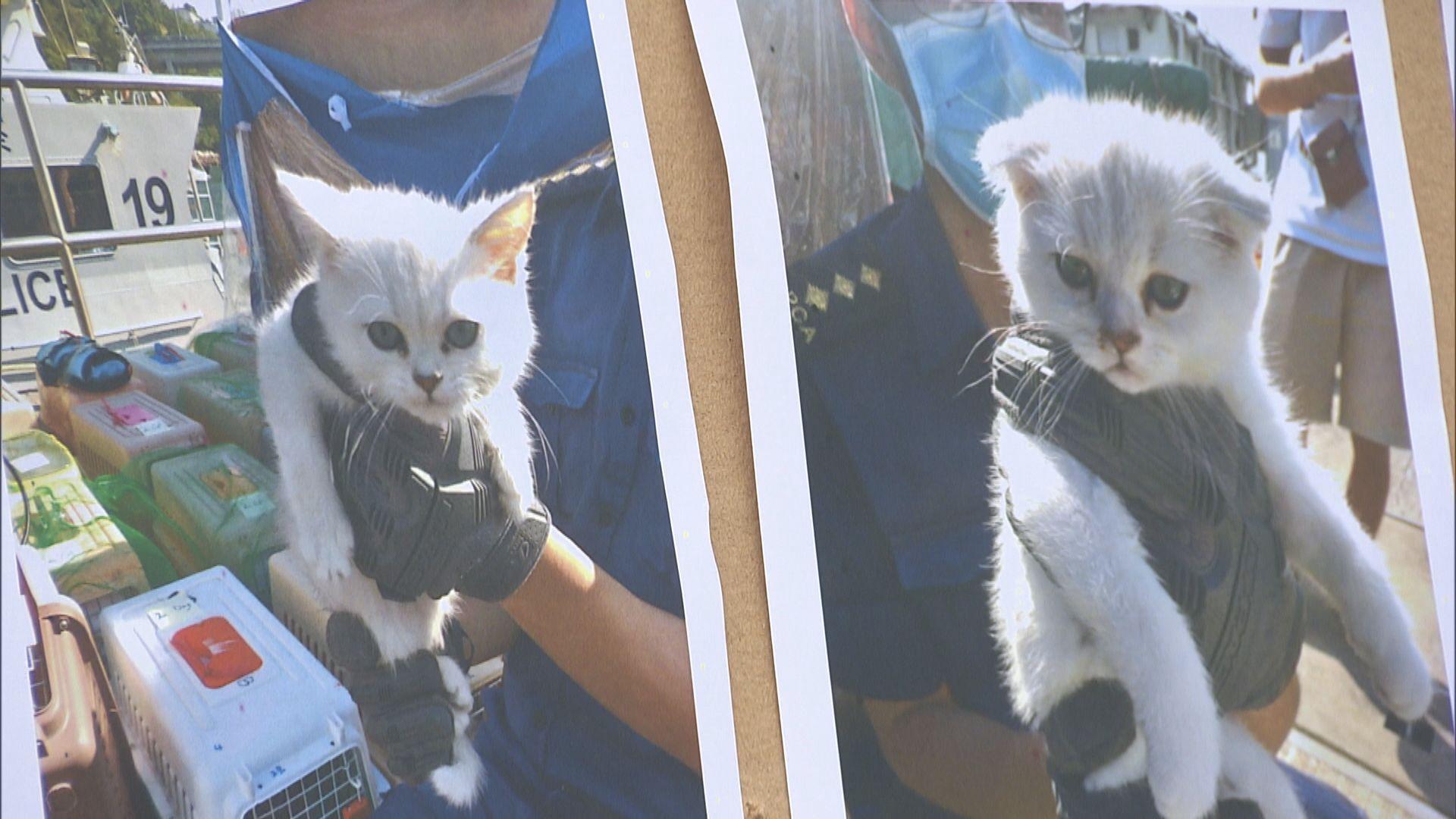 水警海關反走私行動檢獲逾40隻貓狗疑在港販售