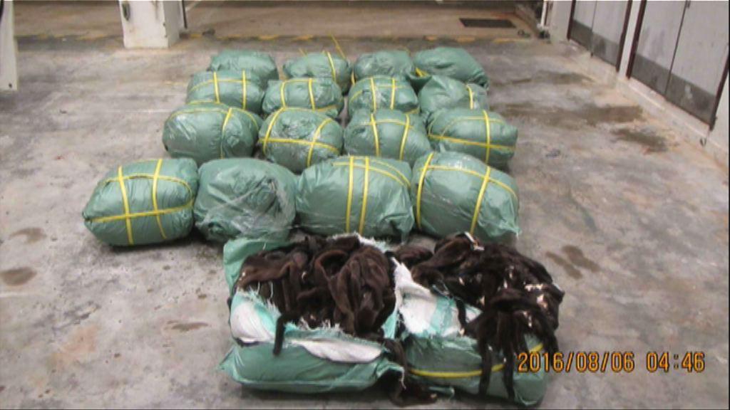 水警西貢檢獲170萬走私動物皮毛