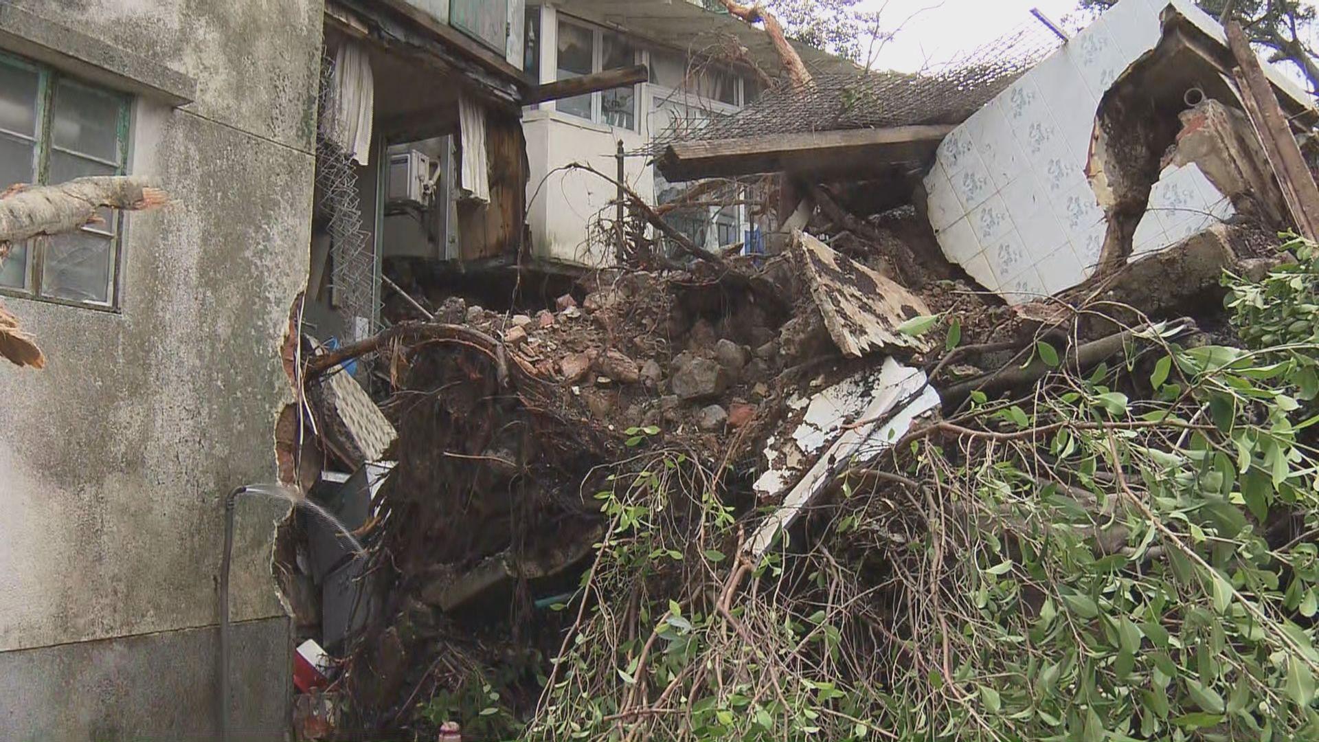 大澳有大樹壓毀房屋居民需撤離