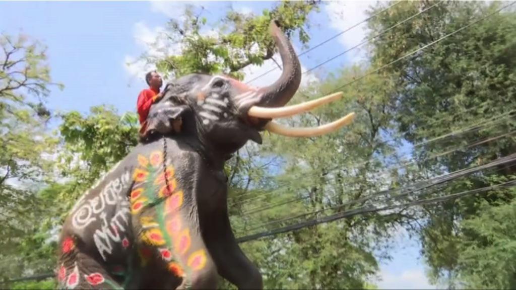 亞洲多國旅遊區大象境況堪憐