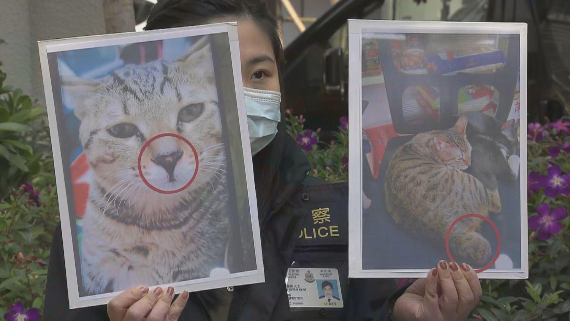 深水埗女子涉盜竊家貓被捕