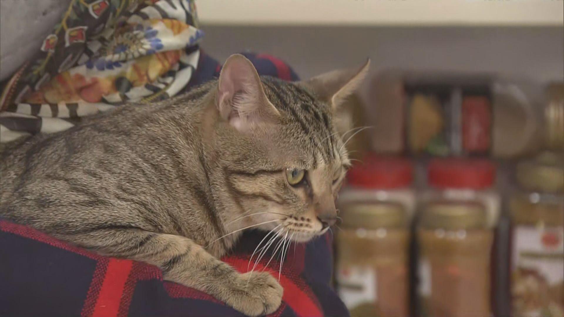 深水埗家貓被盜一日後尋回破案