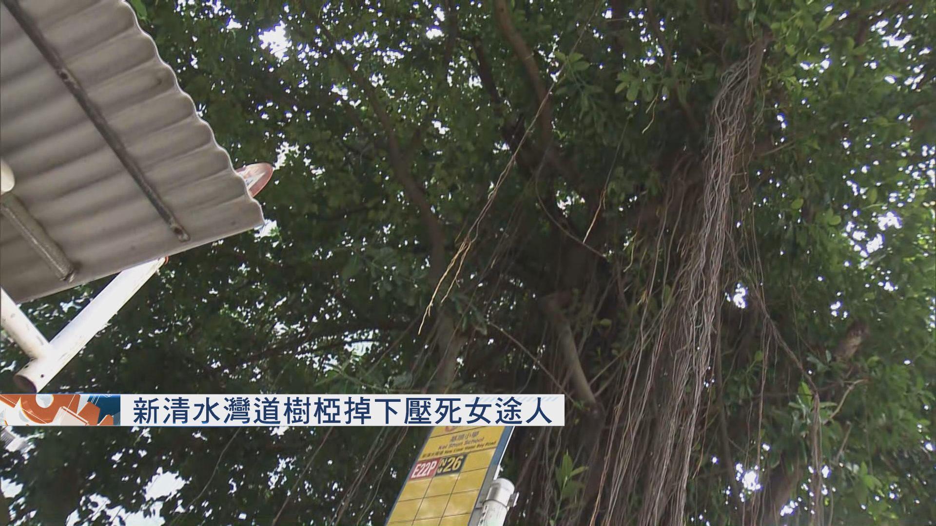 新清水灣道塌樹壓死女途人 據報死者為外傭