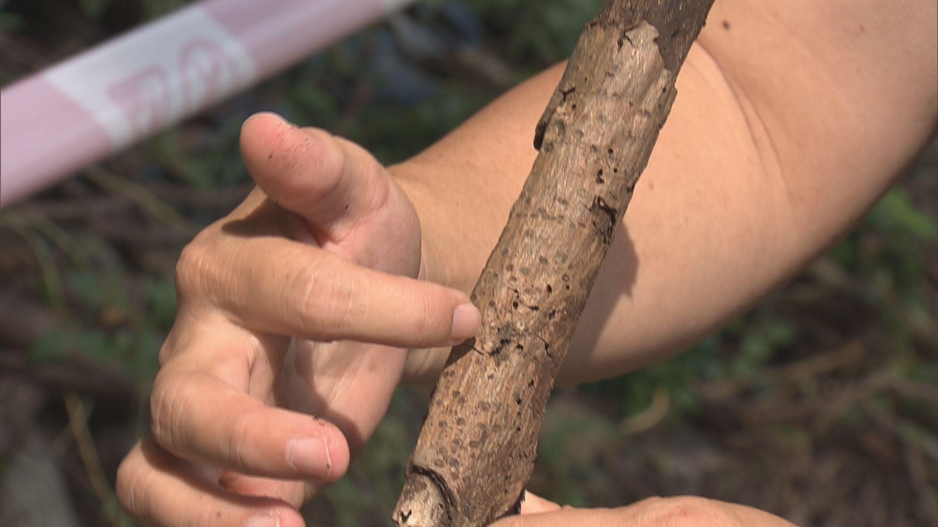 專家質疑承辦商檢測樹木馬虎