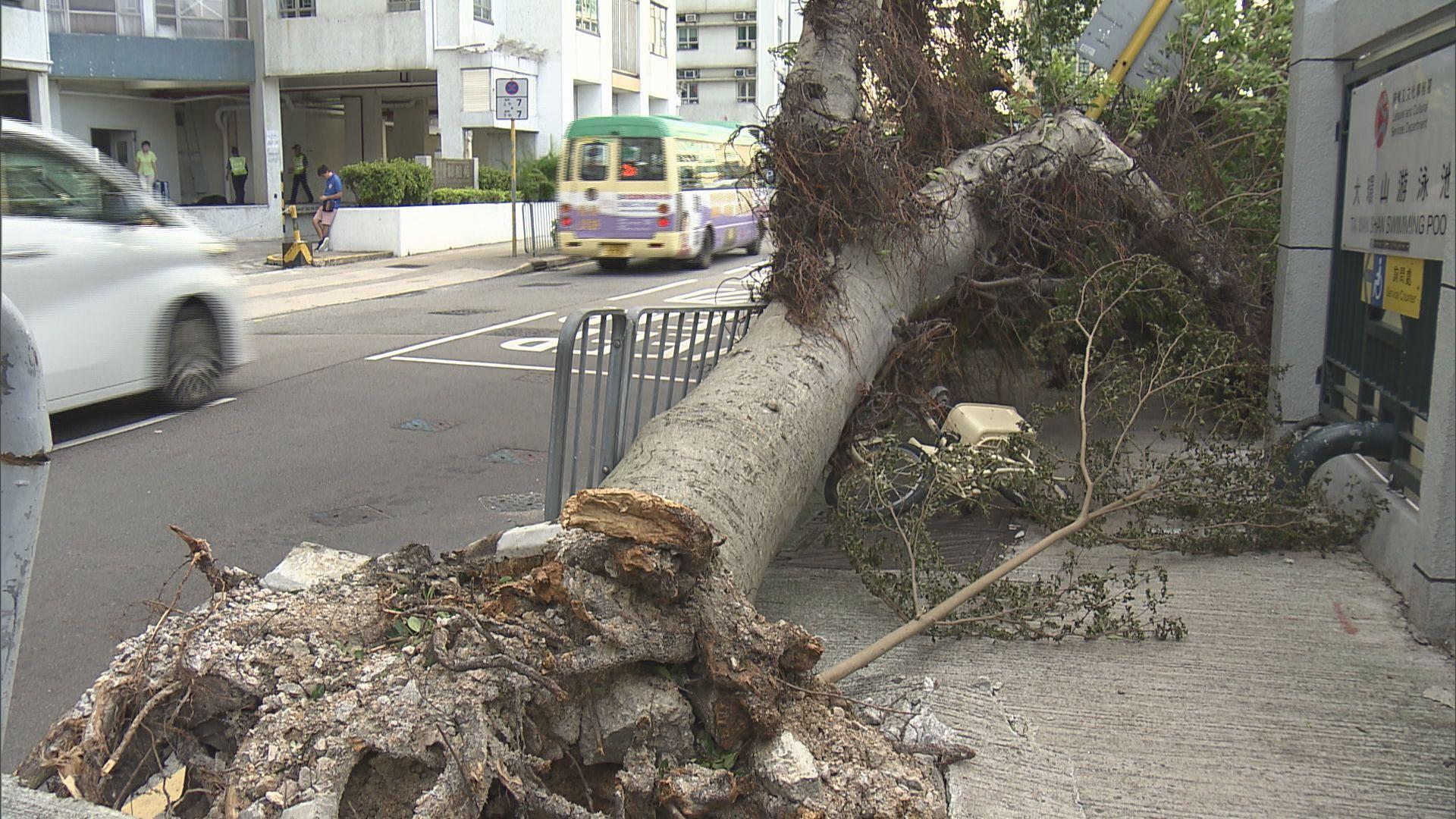 專家指路旁樹木仍有倒塌危機