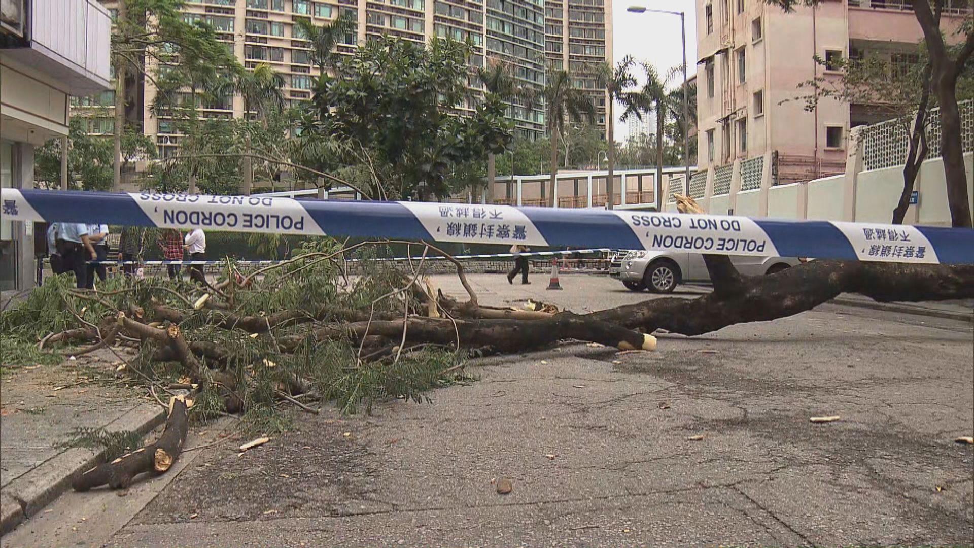 紅磡大樹倒塌 女途人遭樹椏擊傷送院