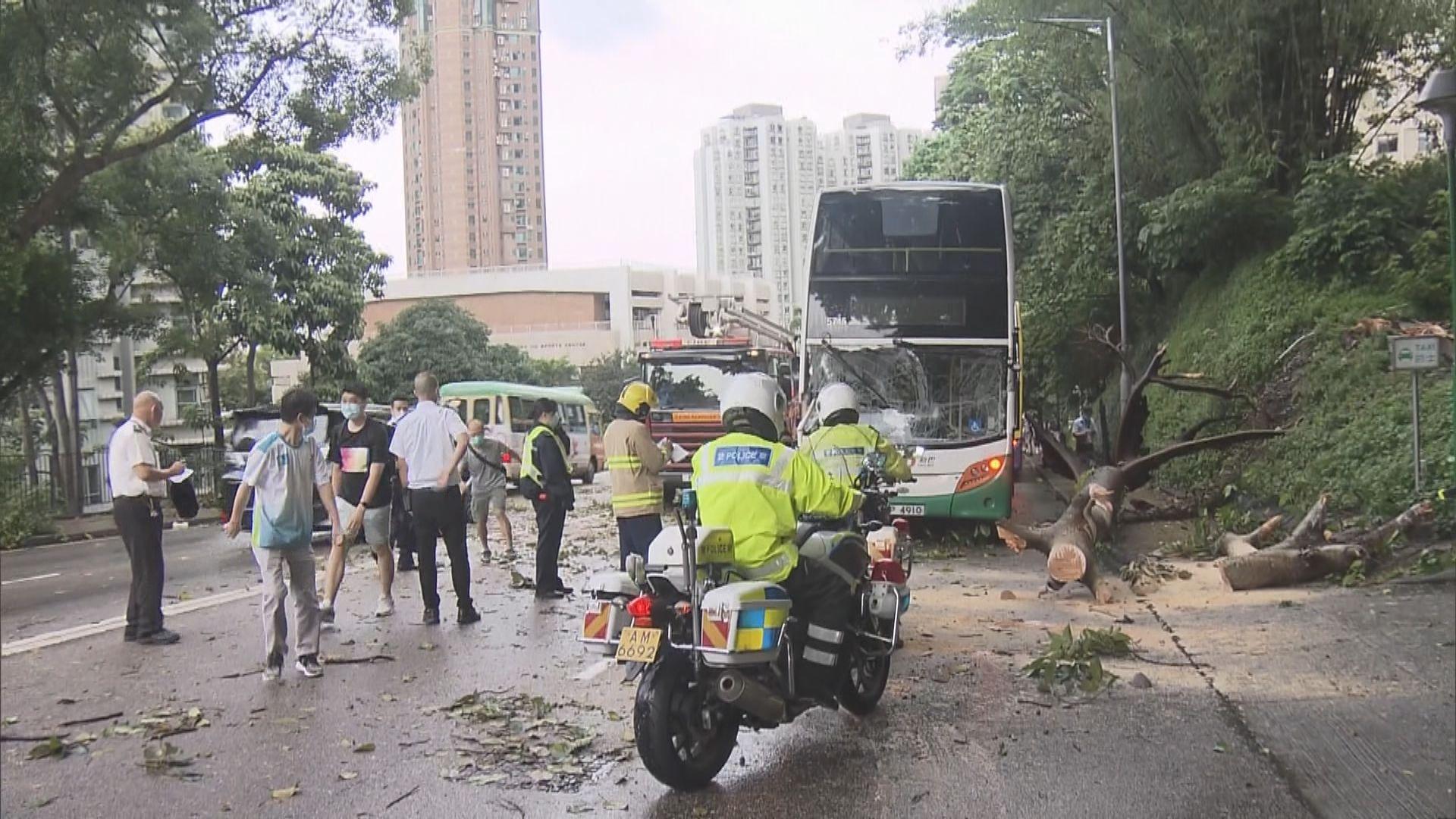西區塌大樹波及新巴、的士及小巴兩人傷 乘客自行下車