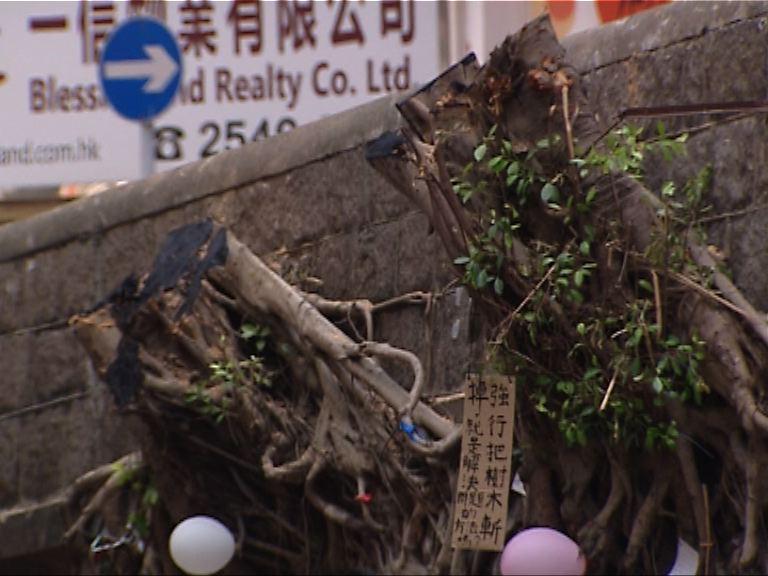 般咸道石牆樹遭砍掉 居民感可惜