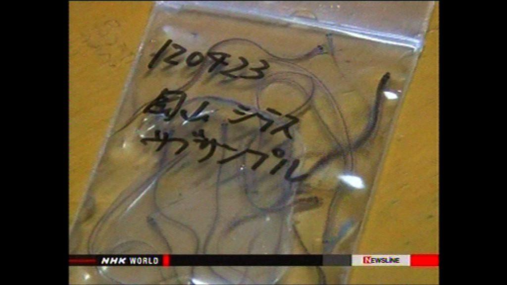 香港輸日本鰻魚苗數量異常上升