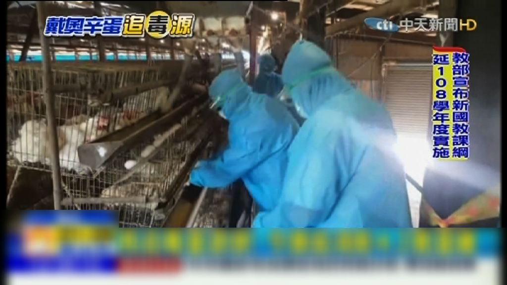 台灣雞蛋二噁英超標 當局銷毀逾四萬隻雞