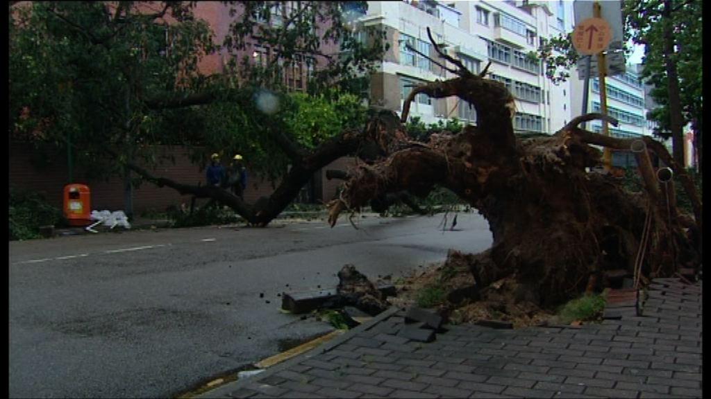 一周兩風 多區再有大樹棚架倒塌