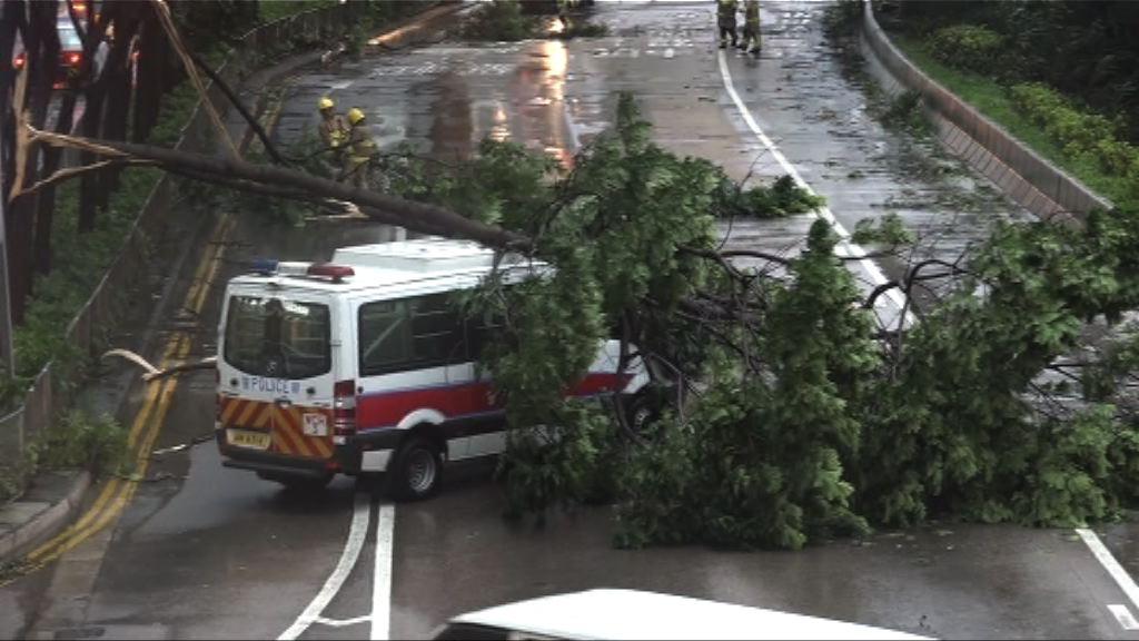 天鴿襲港 當局收到逾600宗塌樹報告