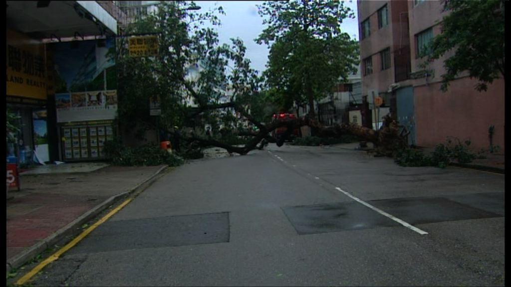 風暴下至少62人傷 收到236宗塌樹