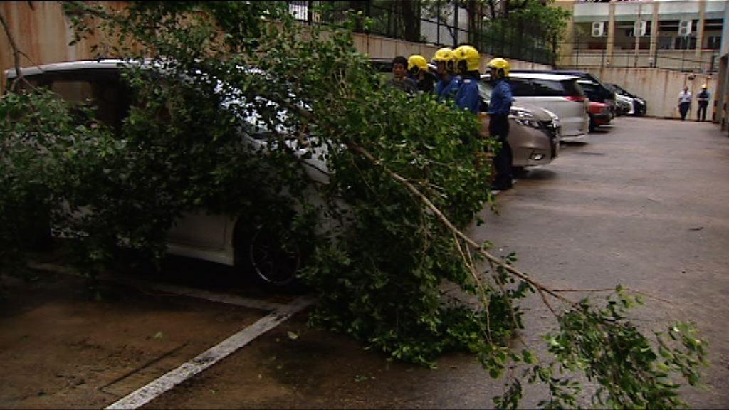 颱風卡努吹襲下有80宗塌樹報告