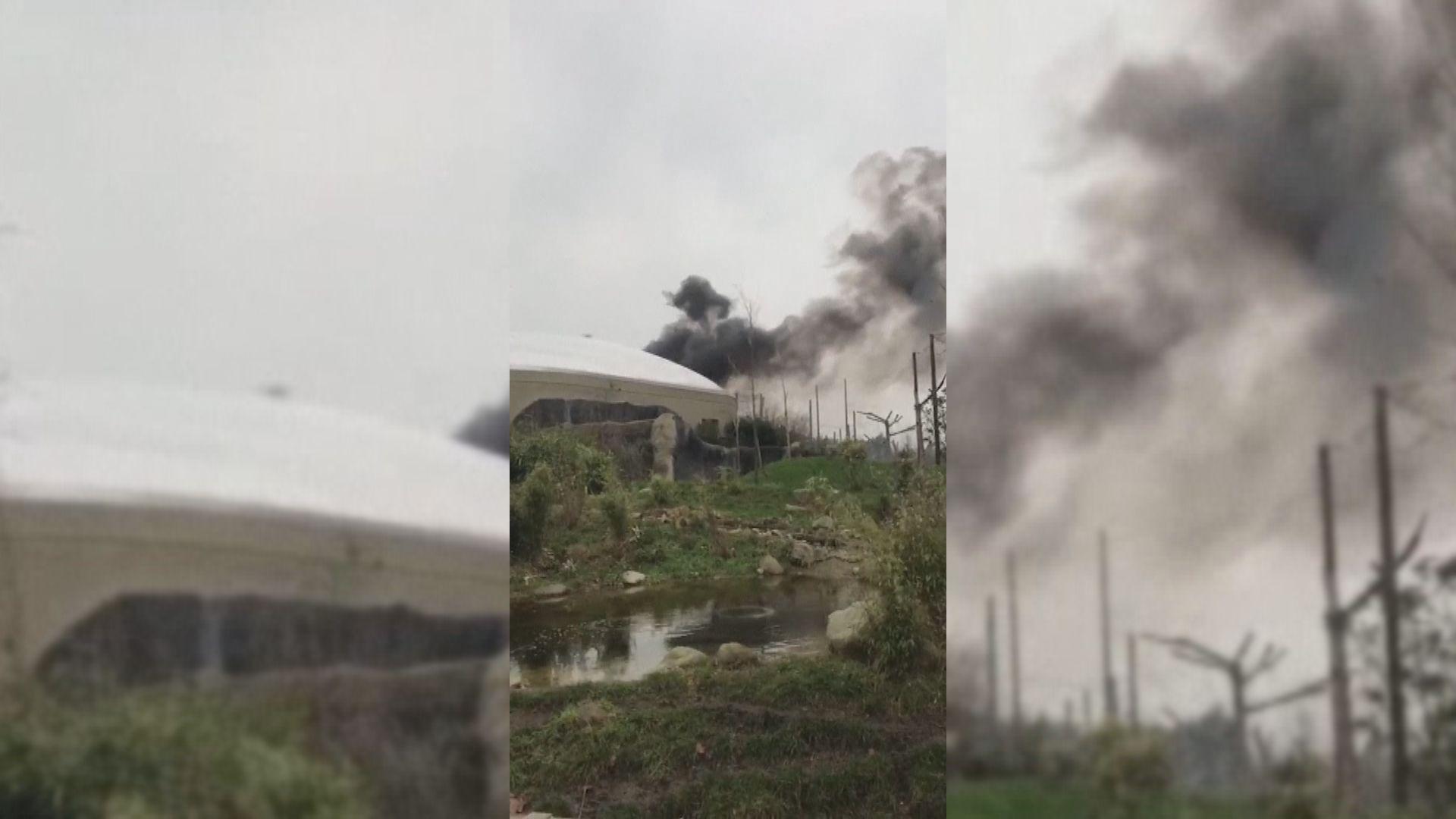 英國切期特動物園季風雨林區起火