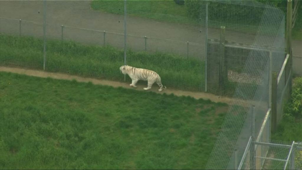 英動物園女職員被老虎襲擊身亡