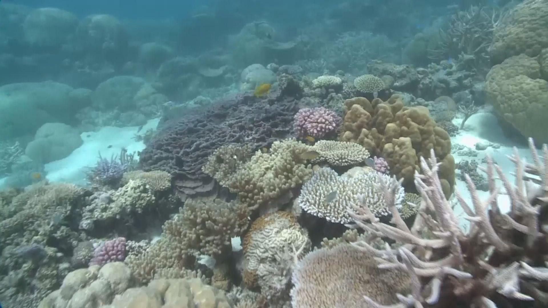 教科文組織建議將大堡礁列瀕危遺產 澳洲反對
