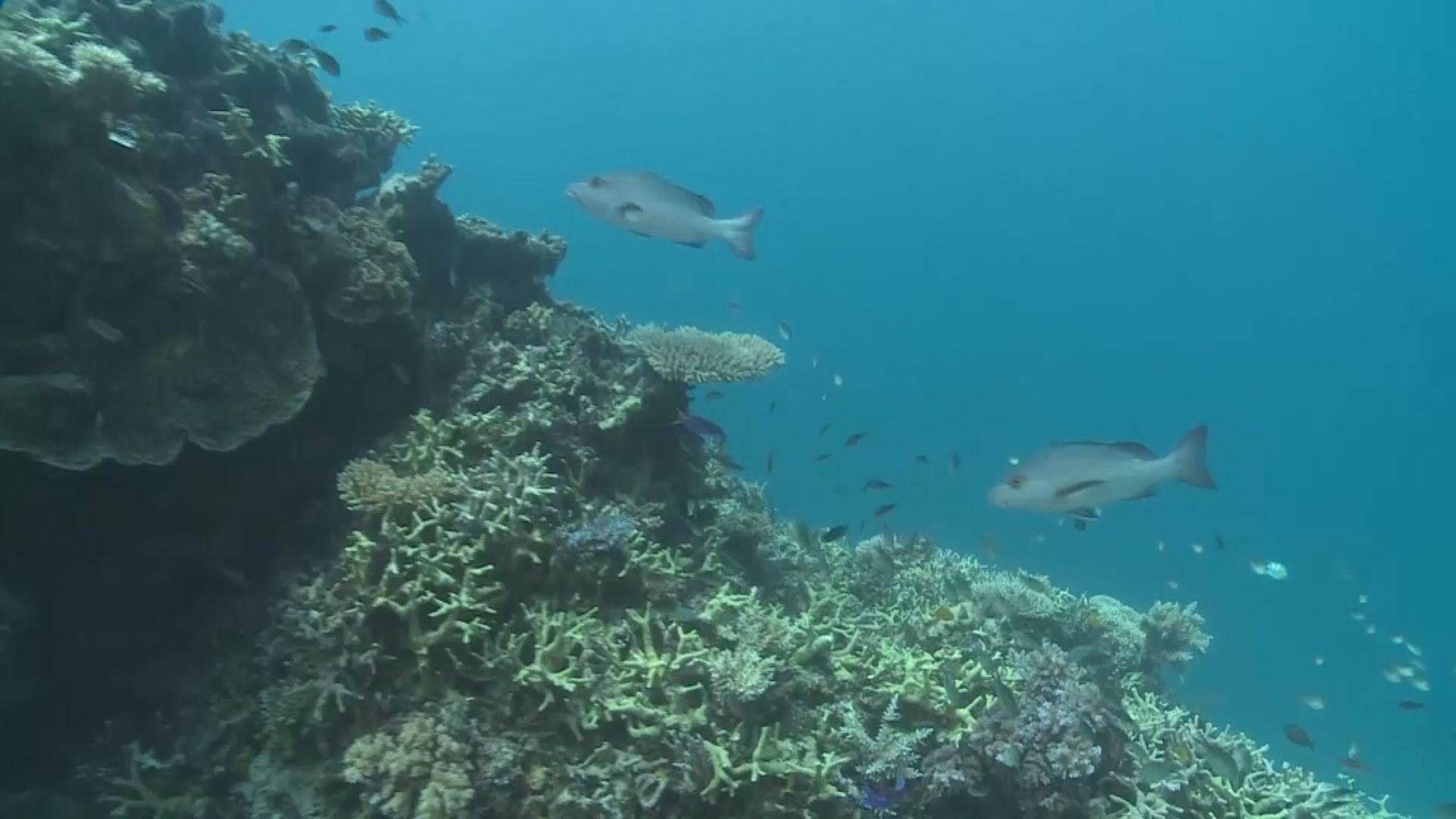 教科文組織建議大堡礁列瀕危遺產 據報澳洲相信中國幕後操弄