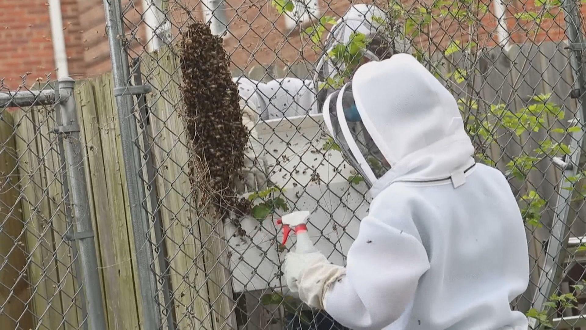 美國發現殺人蜂 專家全副裝備殲滅