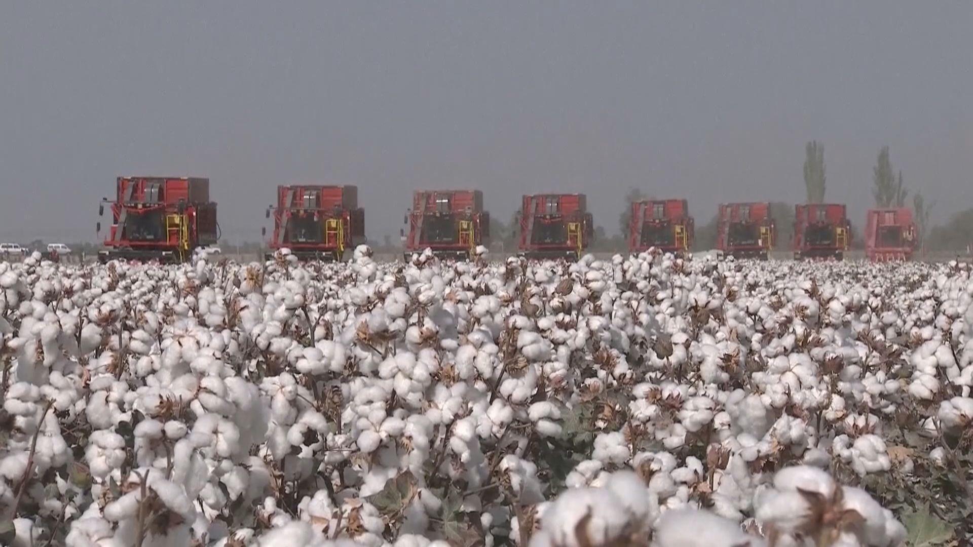 美參議院通過禁進口新疆產品 中國商務部:強迫勞動跟事實不符