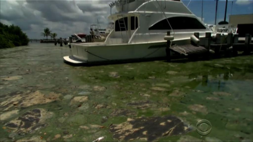 美國湖泊受有毒海藻困擾 危害生態
