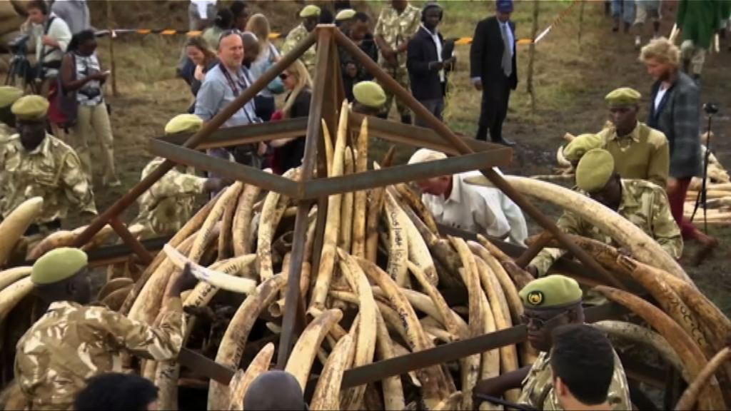 美國擬准進口獵殺非洲象戰利品