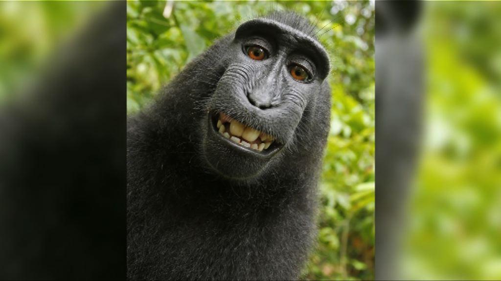 黑冠獼猴肖像案 雙方達成和解