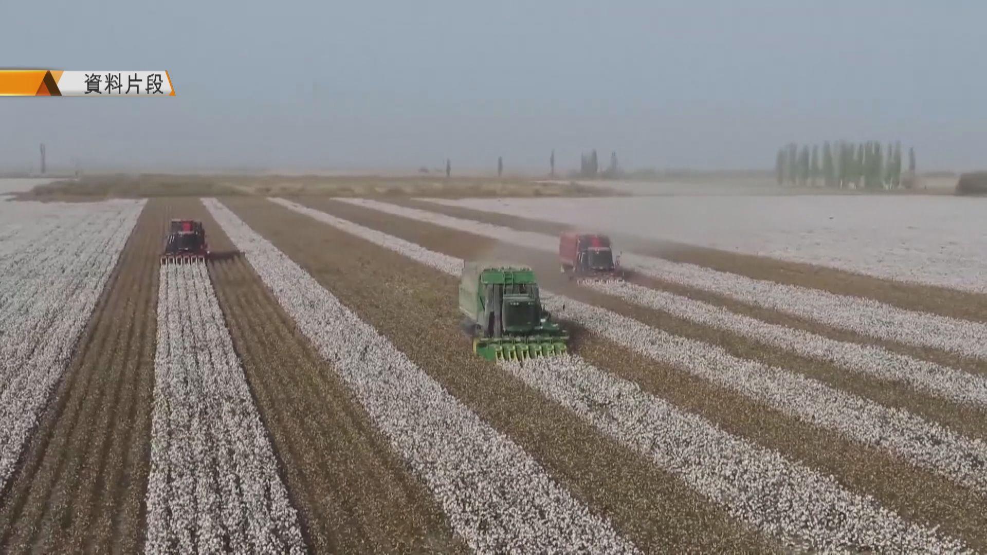 美國押後宣布禁止入口新疆棉製品