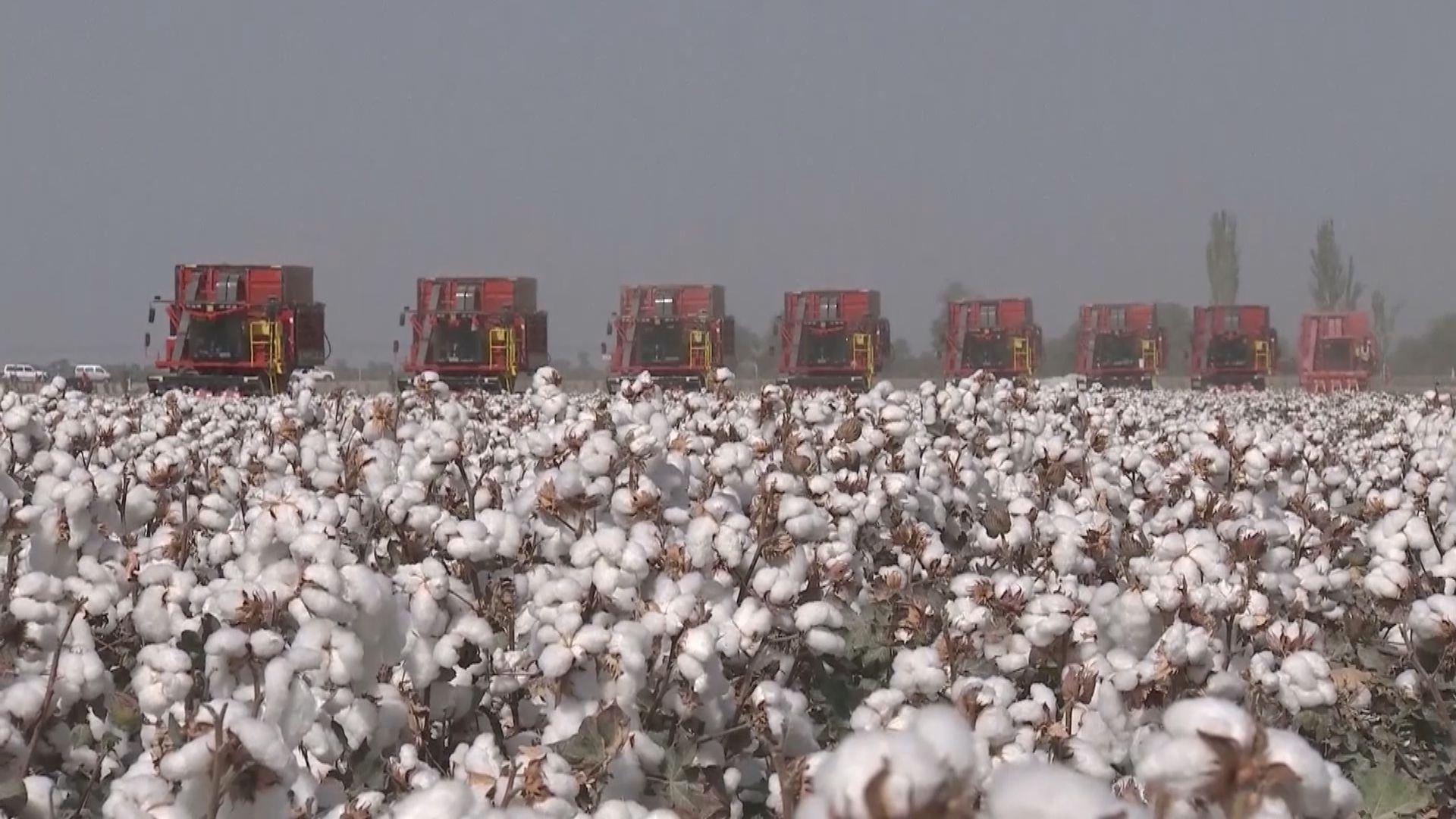 美國停止進口新疆棉花及蕃茄產品
