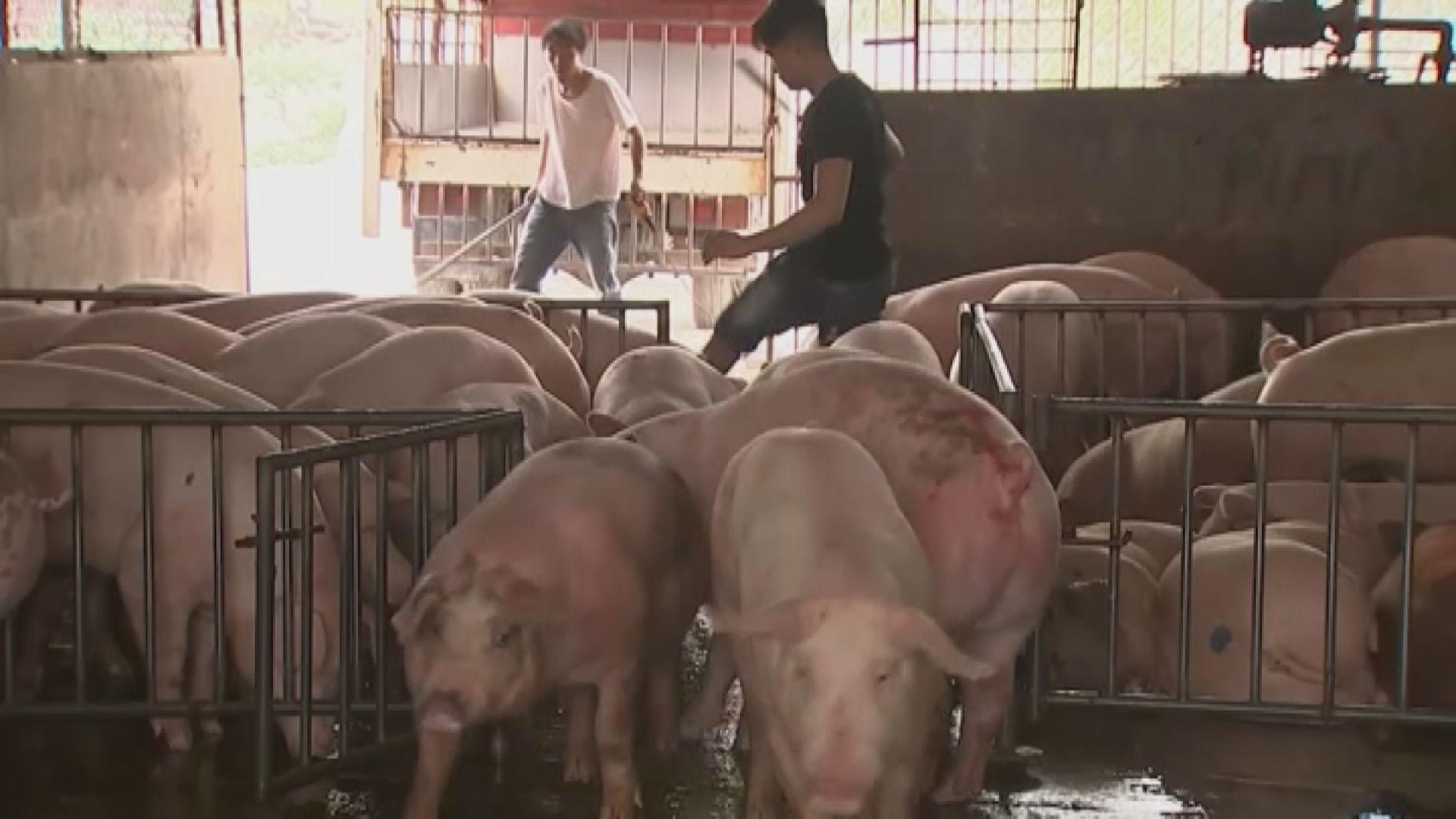 越南撲殺過百萬染非洲豬瘟豬隻