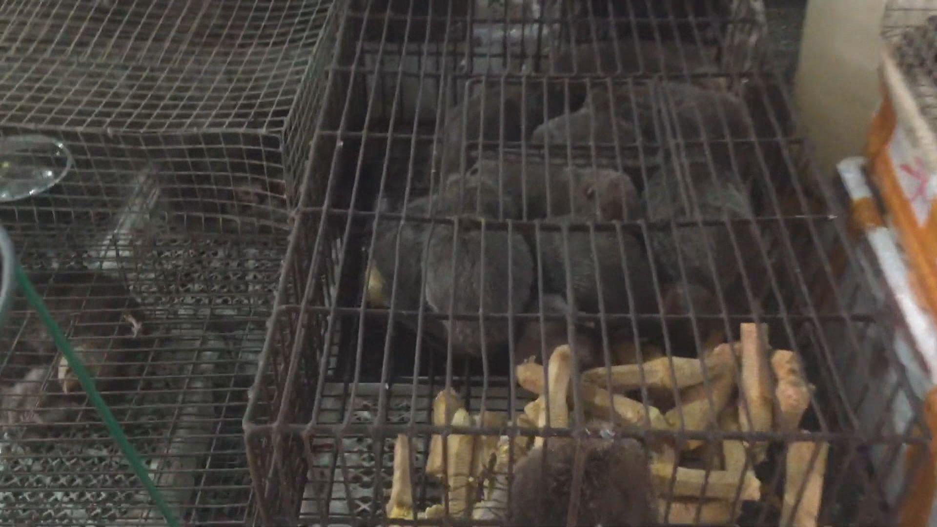內地將整頓野生動物人工繁殖機構