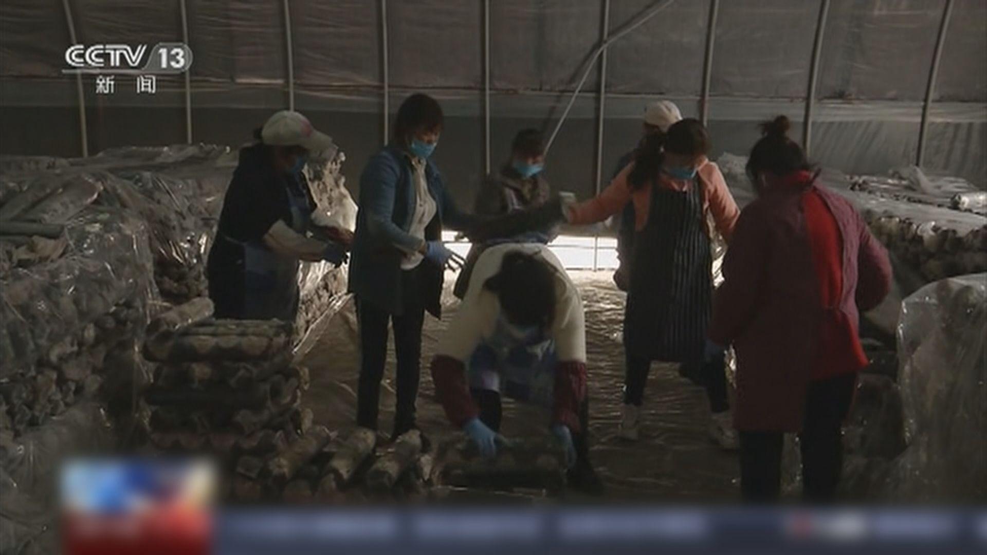 內地六成農民工已復工 料4月初全部返崗