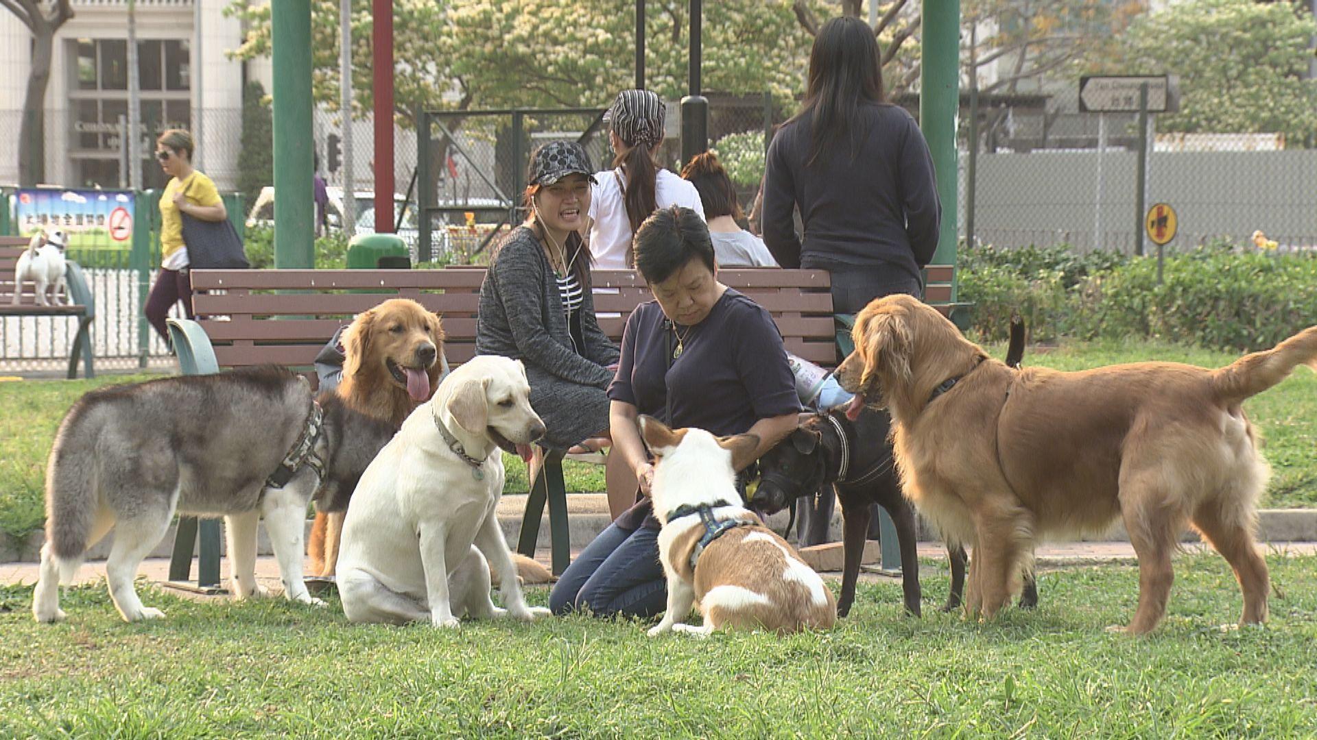 港大及政府研究:人類可將新型冠狀病毒傳播予狗隻