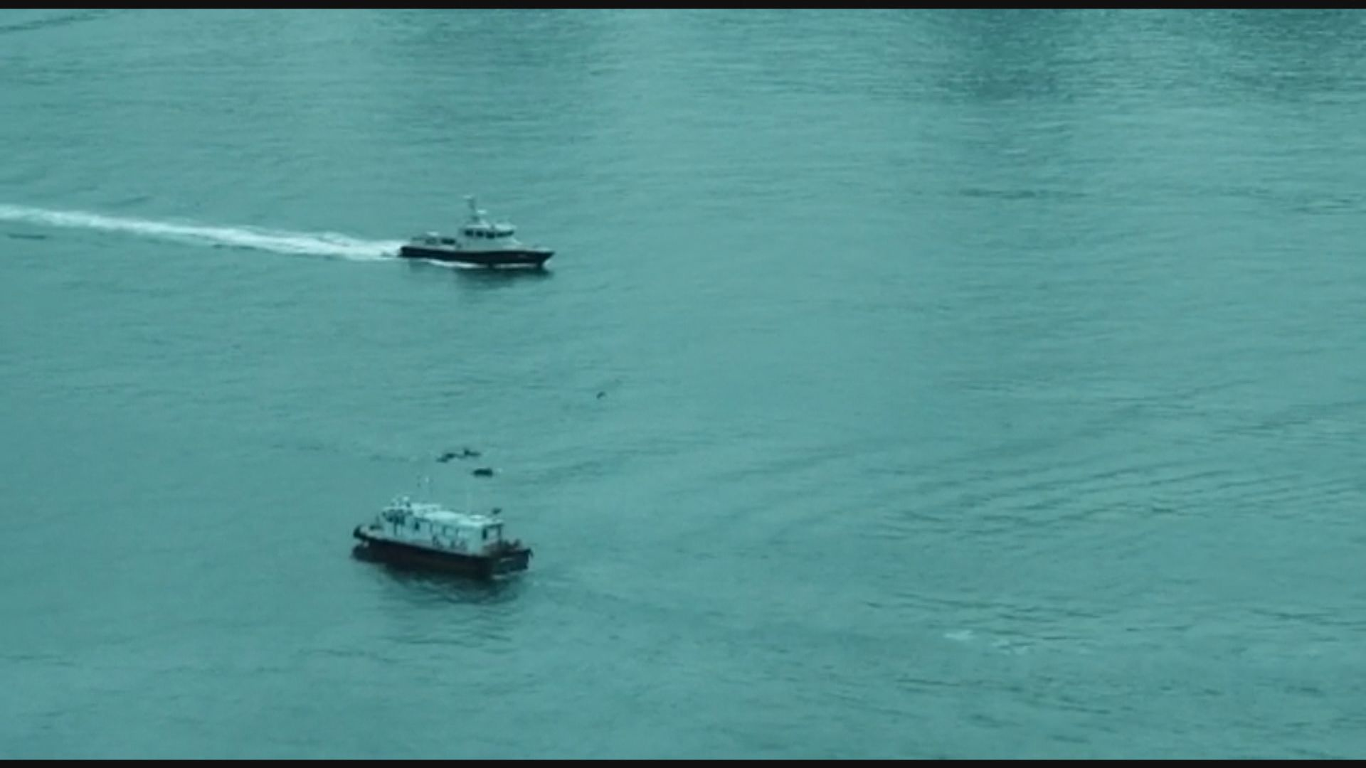 十多條海豚在維港海面出沒