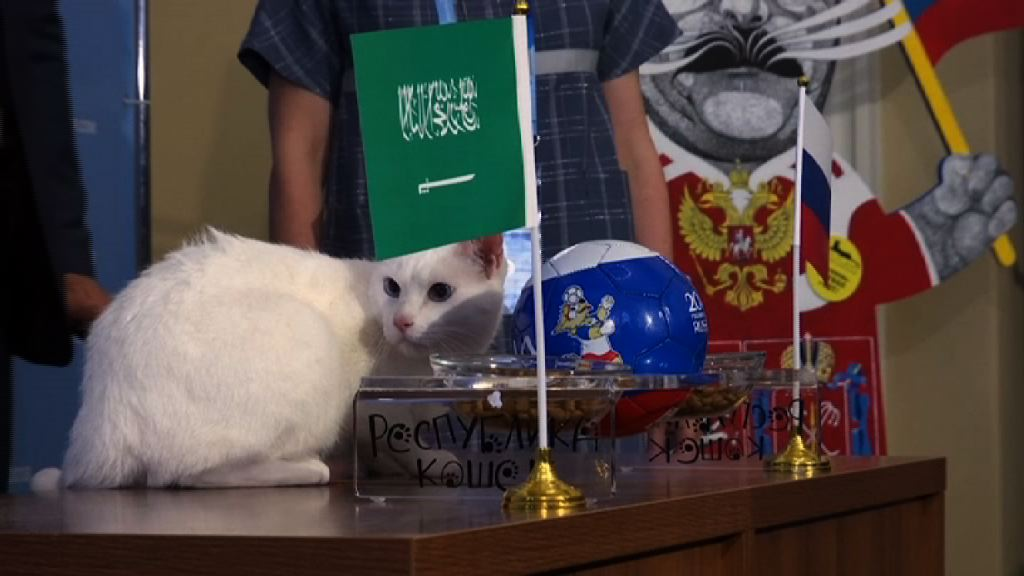 俄羅斯失聰白貓預測世界盃賽果