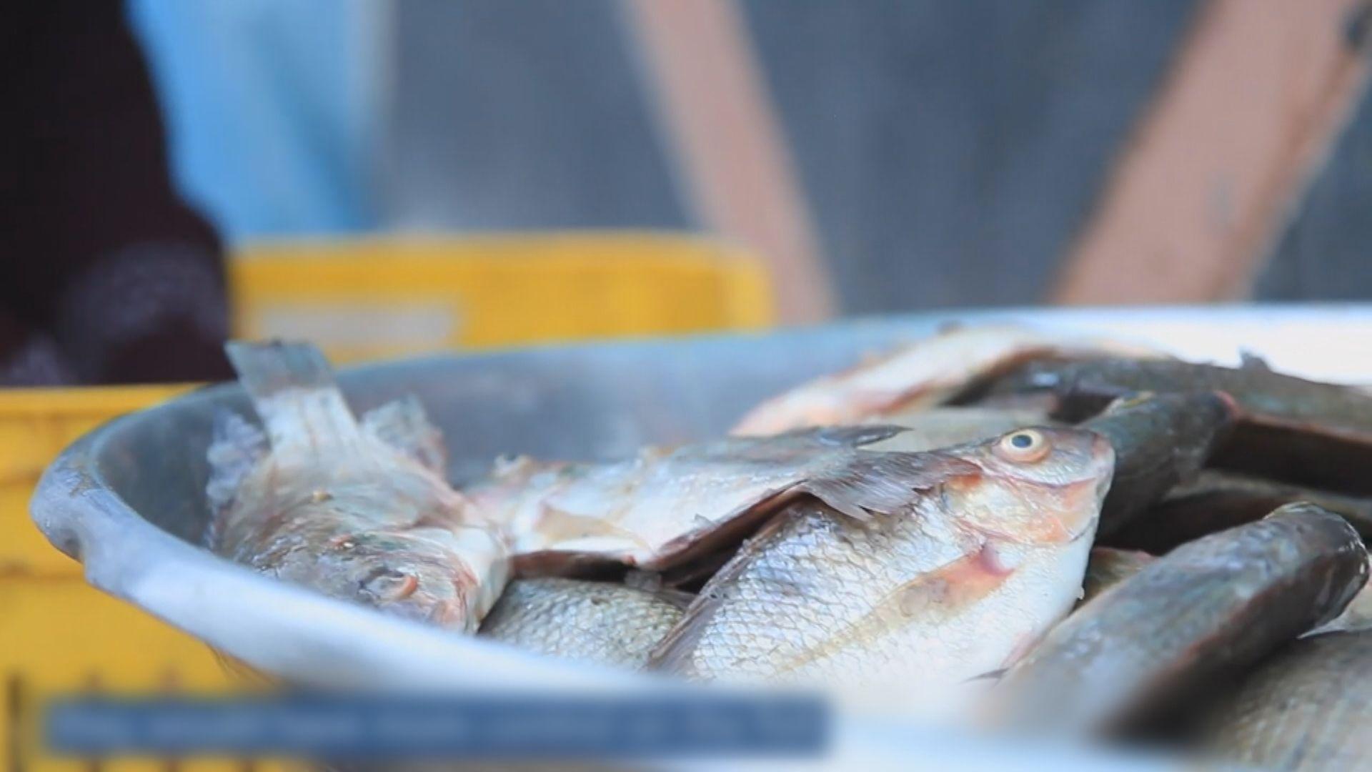 推廣大小魚混養法改善貧民營養和收入 營養學家獲頒世界糧食獎