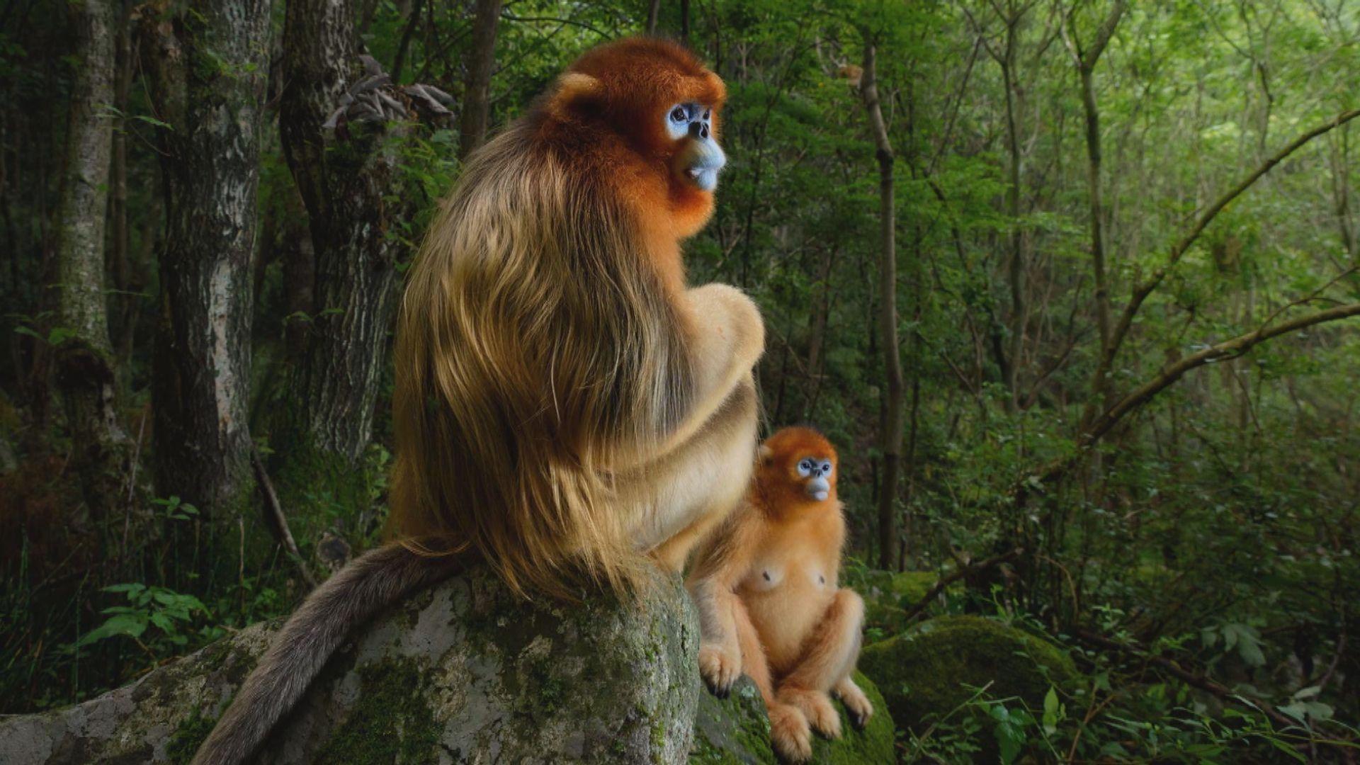 野生動物攝影師大賽得獎名單公布