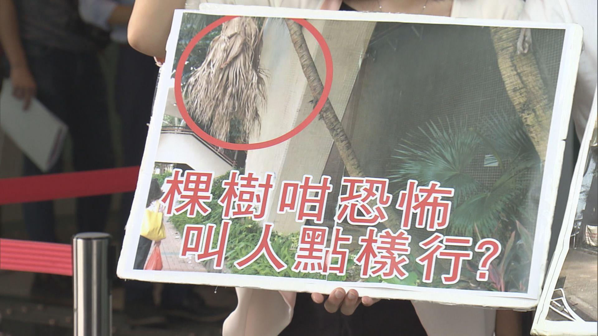 區議員批政府無法催促外判商檢查樹木問題